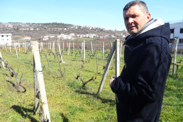 Josip Brkić in the vineyard